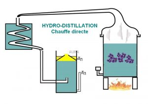 hydro-distillation